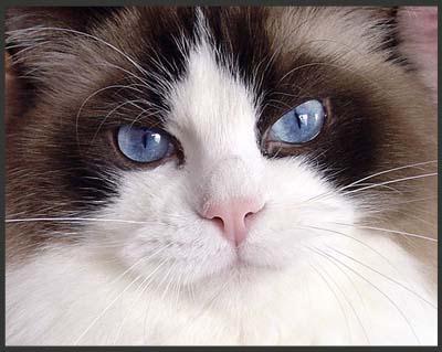 При выборе животного, всегда рекомендуют осматривать глазки